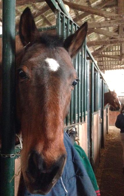 cavallo_stalla_veert_bis