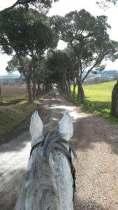 cavallo_vialealber_vert